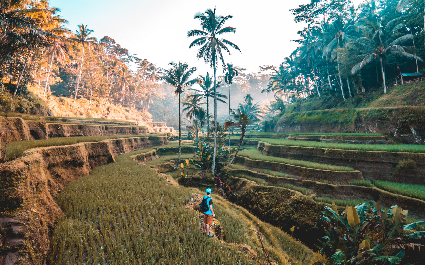 Rice paddies in Ubud - Bali travel guide